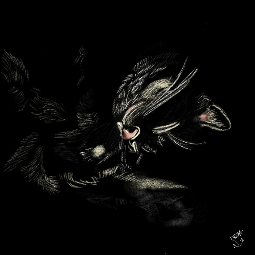 Katzenträume